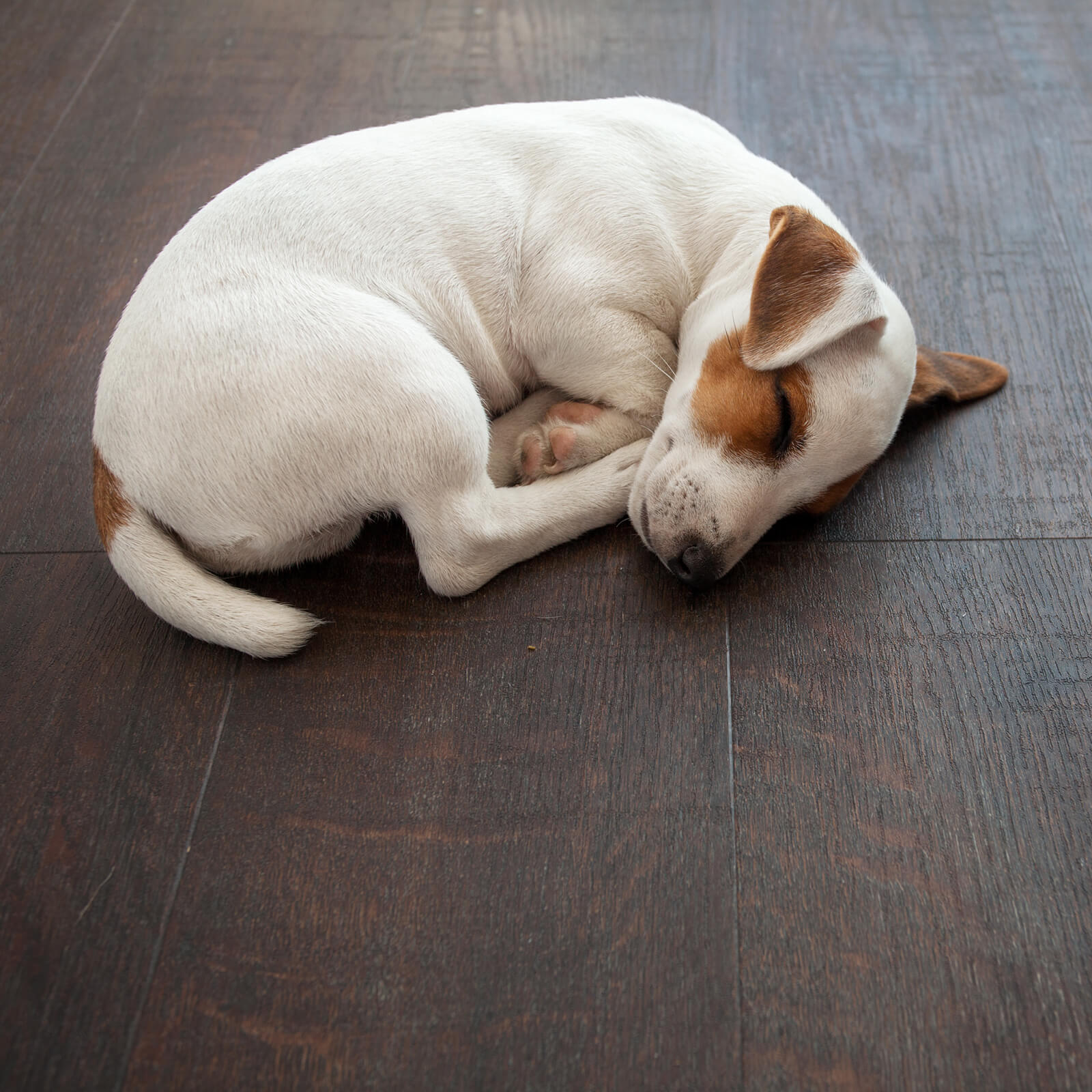 Pet friendly floor | Flooring By Design