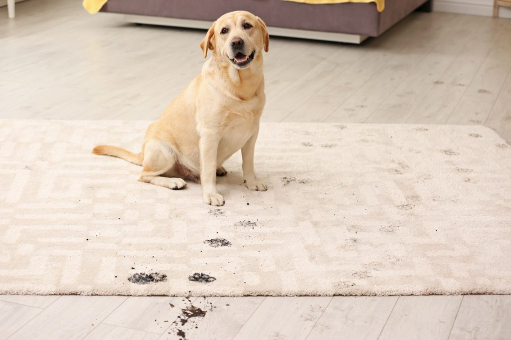 Rug care | Flooring By Design